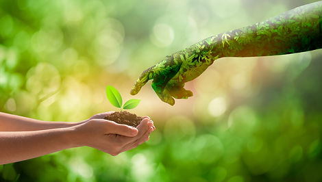 environment Earth Day Hands from nature.Girl hands holding trees growing on bokeh green ba