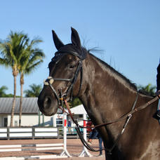 2 ARION COMPETITION BRIDLES