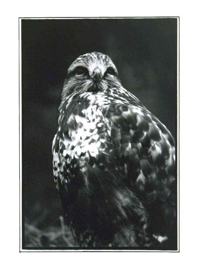 edited eagle-1280.jpg