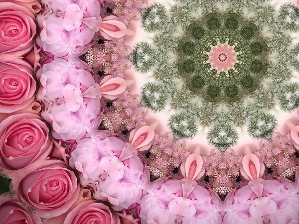 20200528 Rose - Pfingstrose.jpg