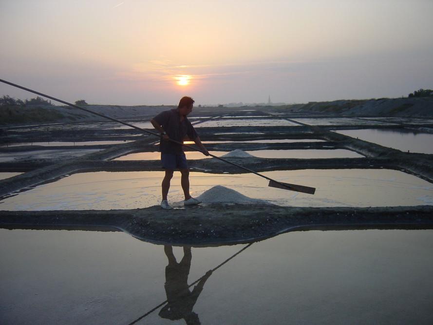 Récolte gros sel