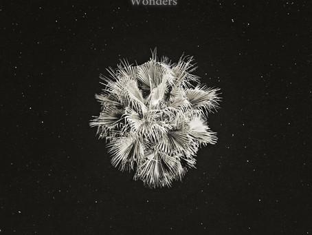 Wonders 2020