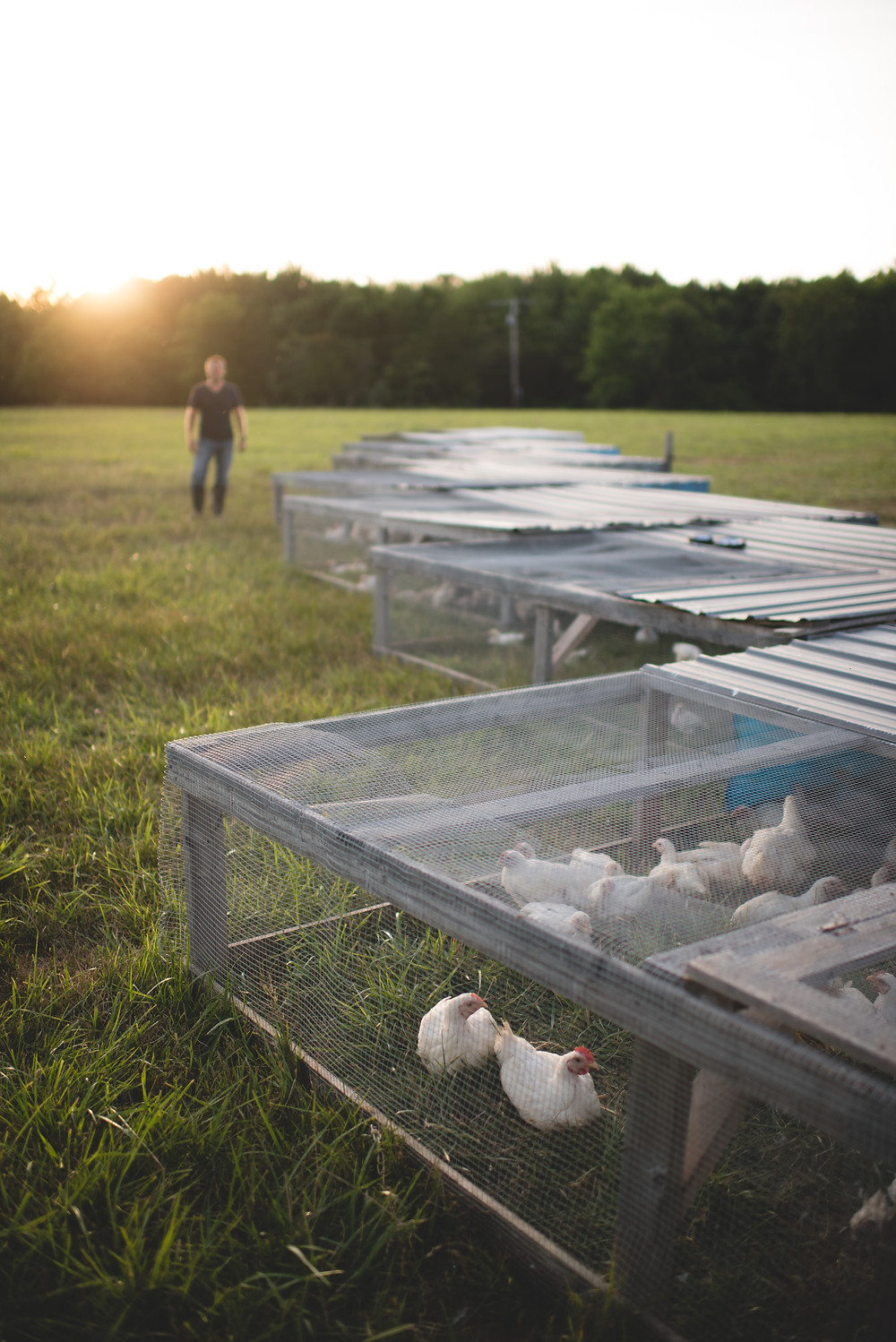 How we used to raise our pastured chickens when we first started the farm