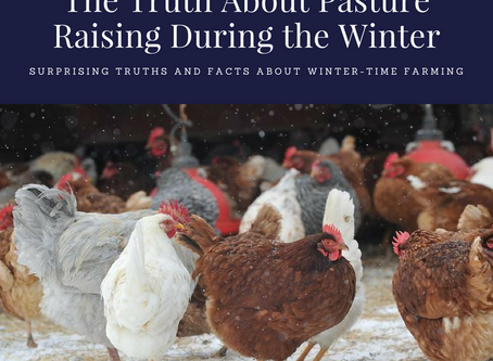 The Truth - Pasture Raising Animals During the Winter