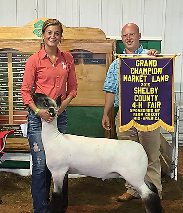 Grand Champion Market Lamb Shelby County