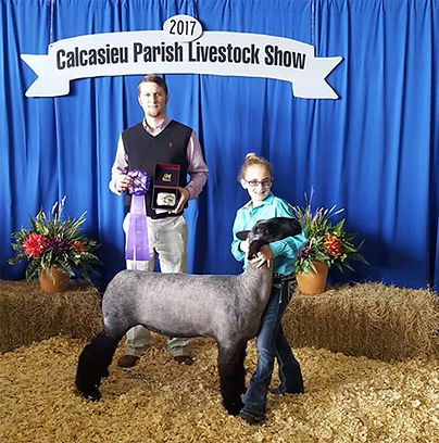 Grand Champion Market Lamb  Calcasieu Li