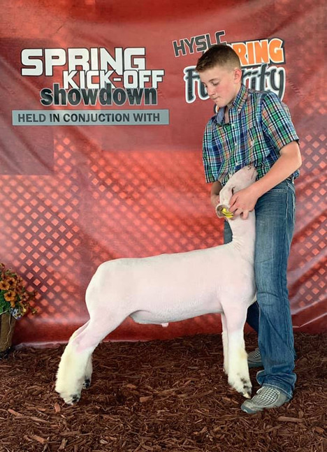 Champion White Face Market Lamb 2020 Spring Kickoff Shown By: JD Morrical  Sire: Colorblind