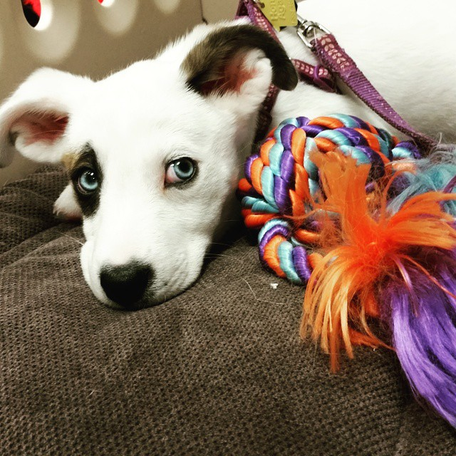 Instagram - I'm in love!!!!!! Nala @doggievip #happydog #husky #huskylove #husky