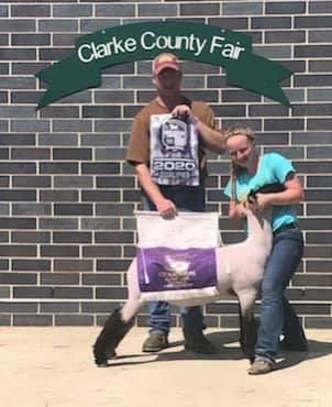 Champion Market Lamb 2020 Clark County Fair, IA & South Central Iowa SHowdown Qualifier  Shown By: Kelly McAfee  Sire: Gunslinger