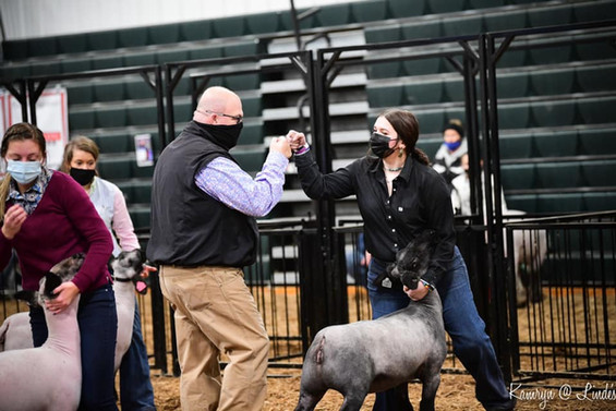 Grand Champion Ewe Lamb Pennsylvania Youth Livestock Expo   Sired By: Emcee Shown By: Kenzie Stadtmiller