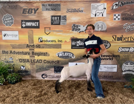 Third Overall Market Lamb WNY Preview Classic  Sired By: Black Betty  Shown By: Danny Nichols