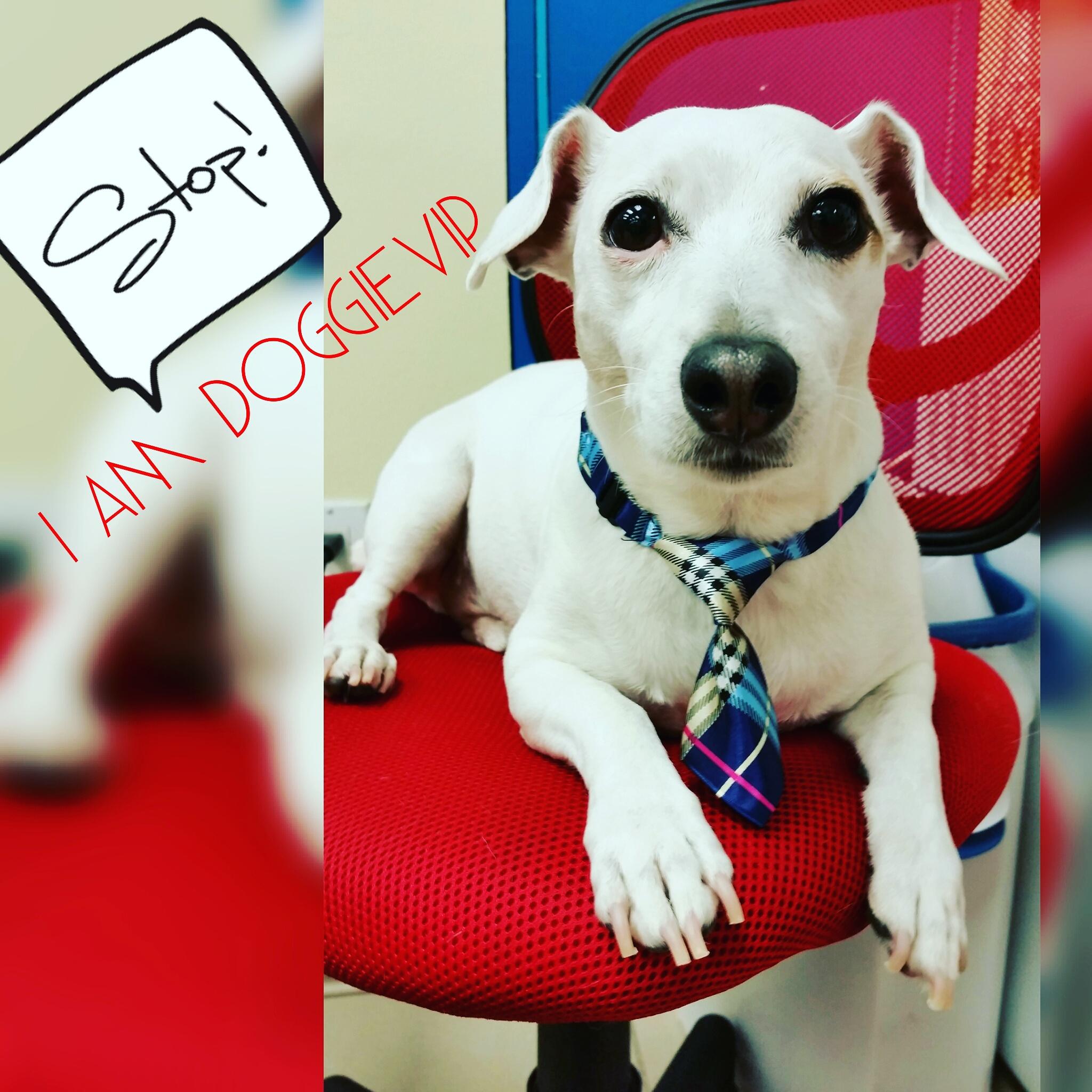 Dog Daycare Miami FL