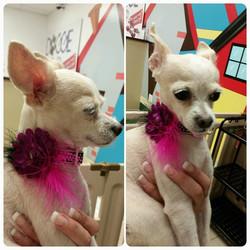 Instagram - Luna at #doggievip #dogdaycare #dogwalkers #doglover #puppies #yorki