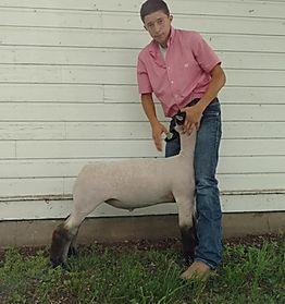 Reserve Champion Market Lamb