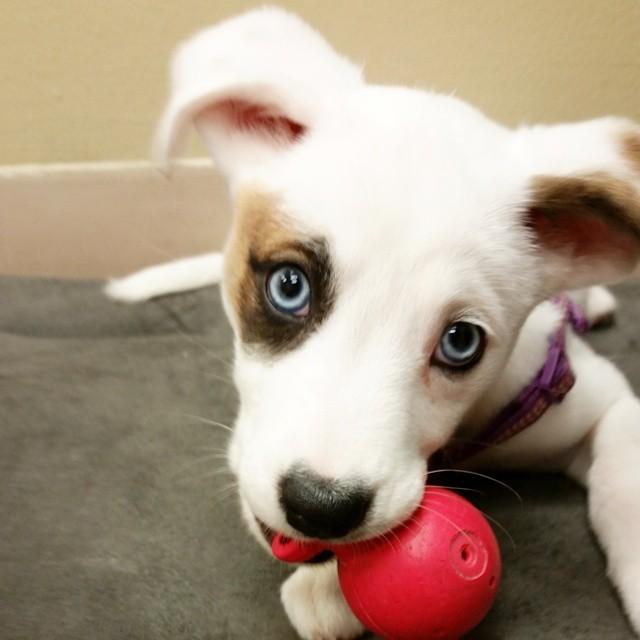 Instagram - DOGGIE VIP MAKES ME HAPPY @doggievip #happydog #smailingdog #dogdayc