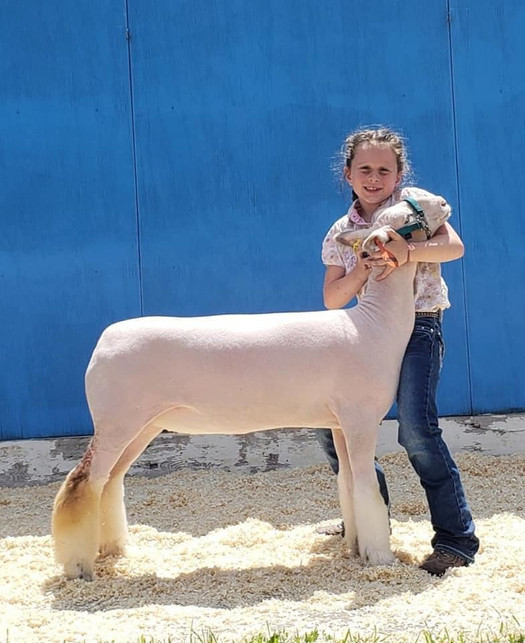Champion White Face Commercial Ewe 2020 Top of Nation Lamb Show, MN Shown By: Alex Resch  Sire: Colorblind