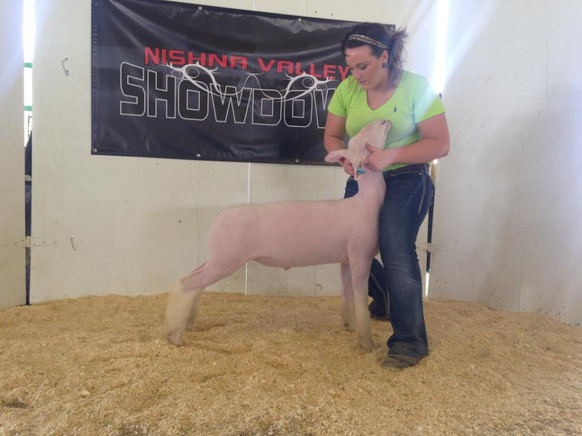 Reserve Champion WBI 2014 Nishna Valley Showdown Show #1 2014 Guthrie Center Jackpot Shown by Chelsea Nelson Sired by Witness