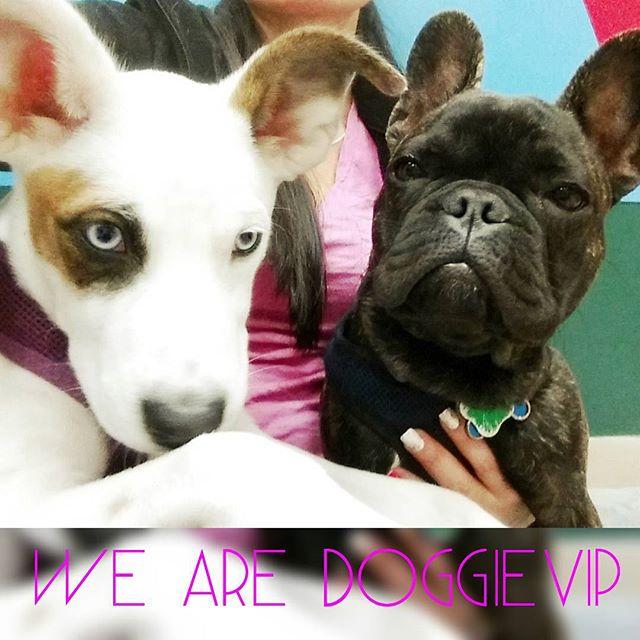 Instagram - @doggievip #dogdaycare  #happydog #dogwalkers #doglover #puppies #hu