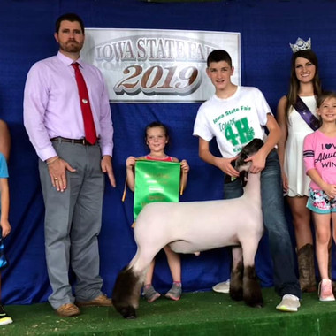 3rd Overall Market Lamb Reserve Division