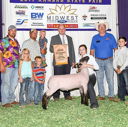 Fourth Overall Market Lamb Kansas State