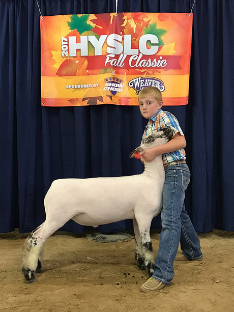 3rd Overall Speckle Face  2017 HYSLC Fall Futurity Shown by J.D. Morrical Sired by Band Camp