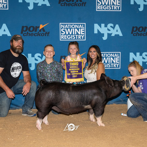 The Exposition  3rd Overall Berk Barrow Shown by: Rhyker Mauck Sire: Joe Exotic  Dam: Shattered  Sold Online March 2 @showpig.com as Lot 6