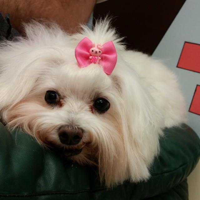 Instagram - DOGGIE VIP MAKES ME HAPPY #happydog #smailingdog #dogdaycare #dogwal