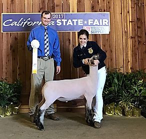 Reserve Champion Speckle