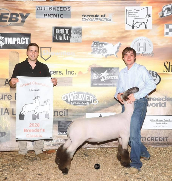 Grand Champion Overall  Breeder's Classic Sired By: Strictly Business Shown By: Weston Stevens