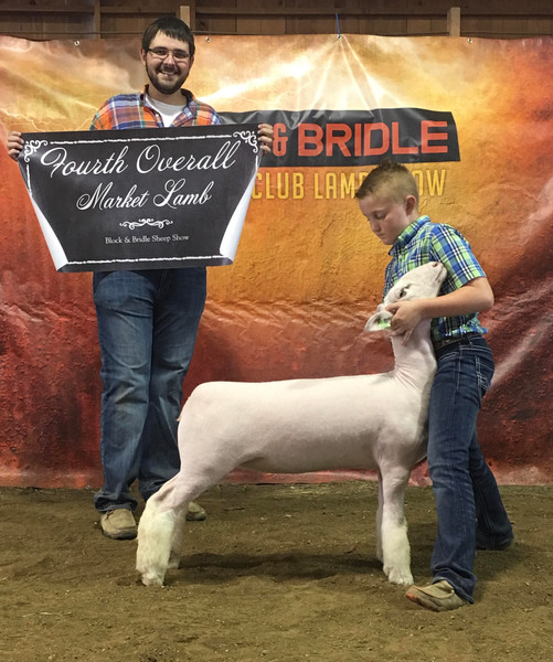 Champion Whiteface 4th Overall Market Lamb 2018 ISU Block and Bridle Champion Whiteface 2018 ICLA Open Show Shown by JD Morrical Shoot Yeah x Witness