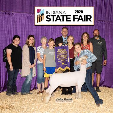 4th overall Breeding Ewe
