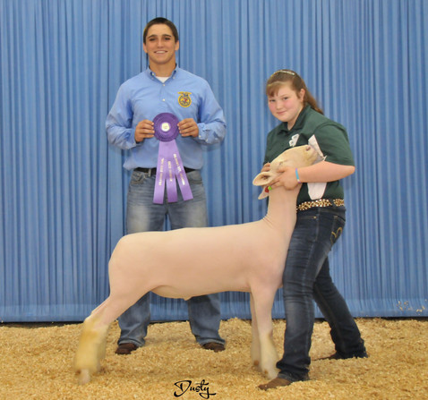 Champion Dorset 2014 Oklahoma State Fair Congratulations Taylor McGill! Sired by Witness