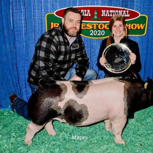 Reserve Division Market Gilt GA Junior National Livestock Show Carolyne Turner