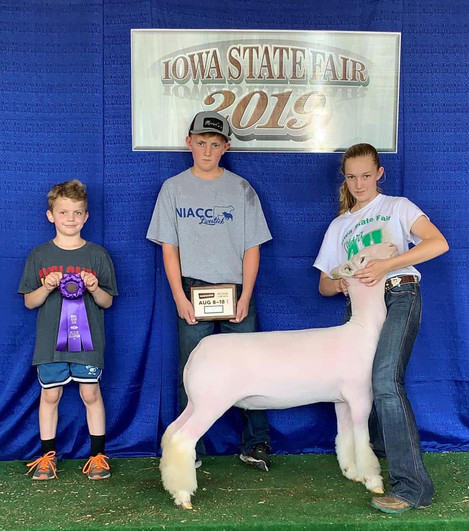 Champion White Face Ewe 2019 Iowa State Fair  Shown By: Sawyer Morrical  Sire: Colorblind