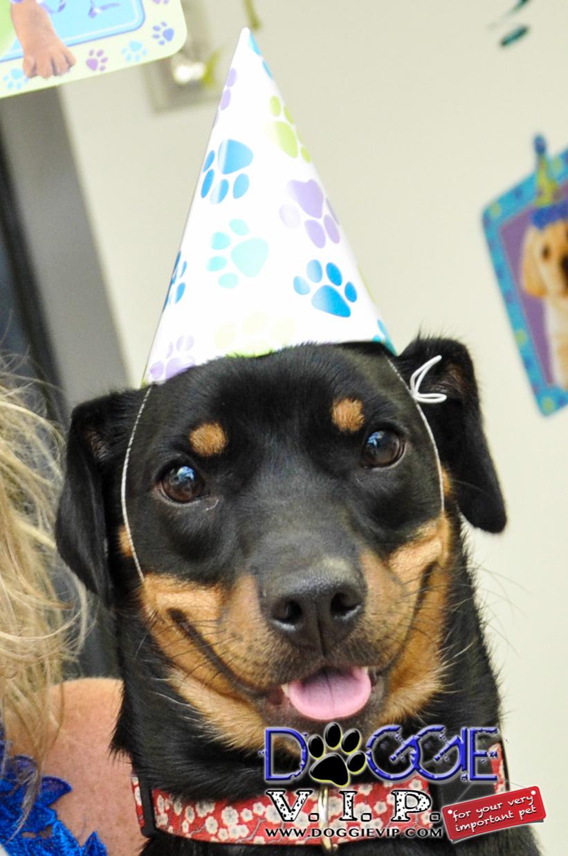 Dog B-Day Party at DoggieVIP Miami