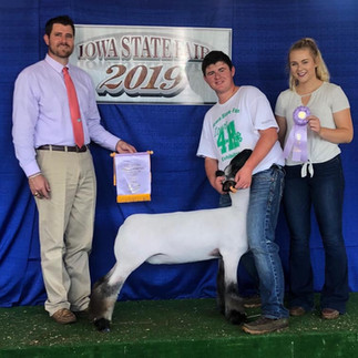 Reserve Grand Commercial Ewe