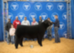 Res Champion Crossbred - Drake Williams