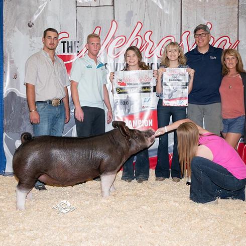 Champion Bershire Gilt Champion Purebred Gilt Overall Nebraska State Fair Alternative Congrats Lentfer Family Sired by Non Stop 48-1 Bred by Schmaling