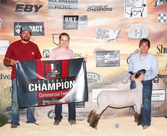 Reserve Grand Champion Commercial Ewe Buckeye Livestock Expo Sired By: Strictly Business Shown By: Weston Stevens