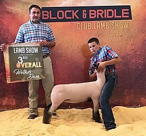Champion Commercial Ewe