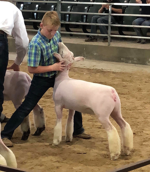 Champion Whiteface Show 1 & 2 4th Overall Market Lamb Show 1 2018 Webster City FFA Boone River Classic Shown by JD Morrical Shoot Yeah x Witness