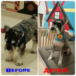 Instagram - #doggievip #dogdaycare #dogwalkers #doglover #puppies #yorkielovers