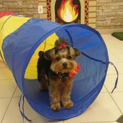 Instagram - DOGGIE VIP MAKES ME HAPPY @doggievip #happydog #yorkiesofinstagram #