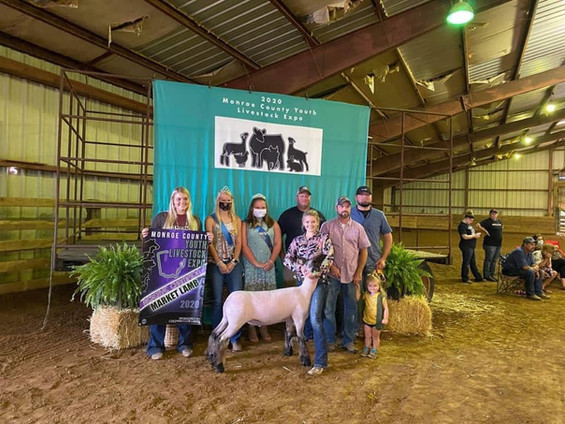 Reserve Grand Champion Market Lamb  Monroe County Youth Livestock Expo  Sired By: Top Tier Shown By: Alexa Marley