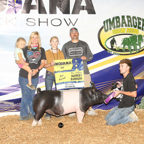 Indiana Stock Show 3rd Overall Div. 2 Cross Barrow Mya Davidson Sired By Quick & Dirty