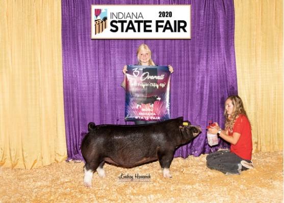 Indiana State Fair 3rd Overall Poland Gilt Evelyn Harris