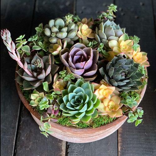 Succulent Sensation - 10 inch