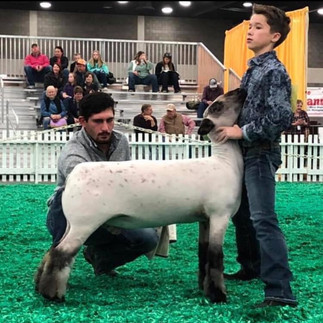 1st Place Late March Hampshire Ewe Lamb