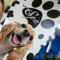 Instagram - Belle @doggievip where your pooch is pampered #happydog #rescue #kin