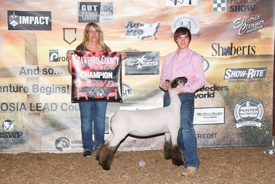 Grand Champion Commercial Ewe Crawford County Clash  Sired By: Strictly Business Shown By: Weston Stevens